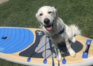 Paddleboard Dog on a YOLO Board Dogwood Inflatable