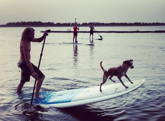 Paddleboarding with your Dog- How To